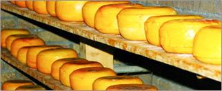 チーズの作り方