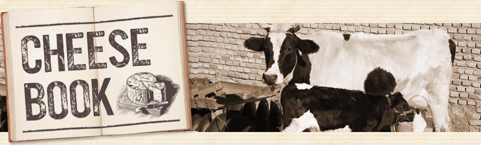 チーズの歴史メイン写真